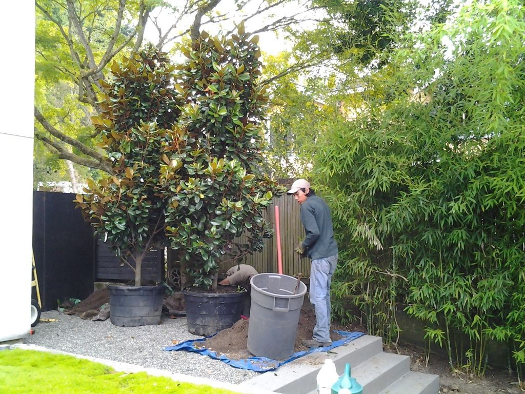 Landscaping Maple Valley Washington
